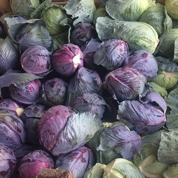 Fresh picked Cabbage